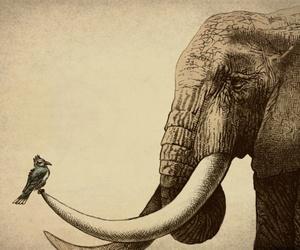 bird, elephant, and animal image