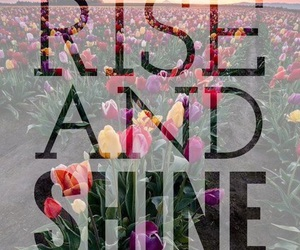 flowers, quote, and tulips image