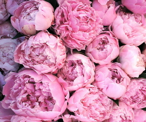 fleur, flowers, and pink image