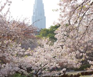 nature, beautiful, and japan image