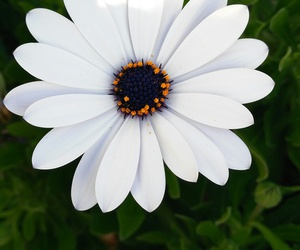 flowers, white, and menorca image