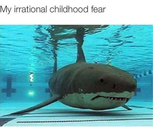 shark, funny, and childhood image