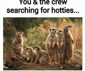 funny, crew, and friends image