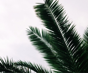 green and palme image