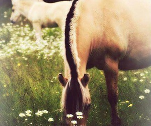 horse, fjord, and flowers image