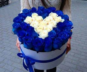 rose, flowers, and blue image