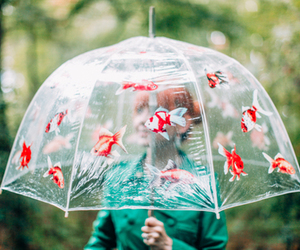 umbrella, rain, and fish image