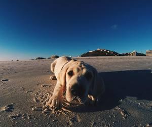 animals, mar, and beach image