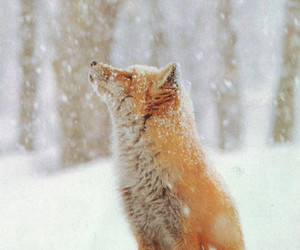 fox, snow, and winter image