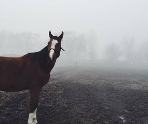 horse, love, and omgg image