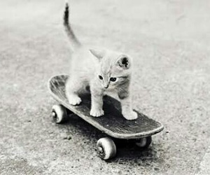 cat, cute, and skateboard image