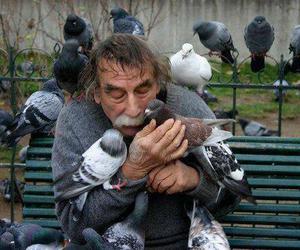 pigeon image