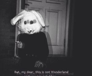 alice, wonderland, and bunny image