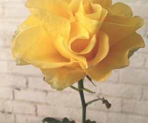 amarillo, yellow, and flor image