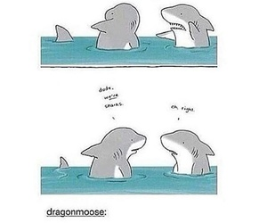 shark, funny, and teenagers image