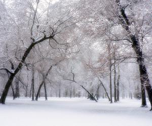 landscape, wholesale7, and snow image