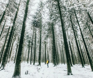 cold, forest, and frozen image