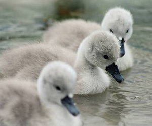 adorable, babies, and photography image