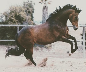 animal, beauty, and equestrian image