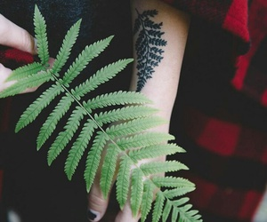arm, fern, and green image