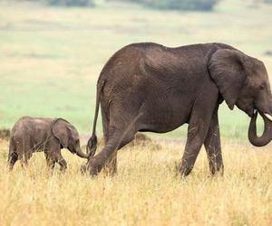 animals, baby, and child image