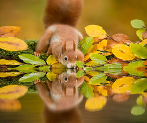 squirrel, animal, and water image
