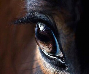 horse, eye, and eyes image