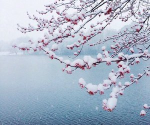 snow, flowers, and nature image