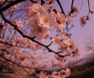 flowers, photography, and tree image