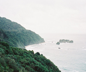 forest, nature, and ocean image