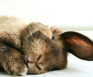 bunny, sleep, and cute image