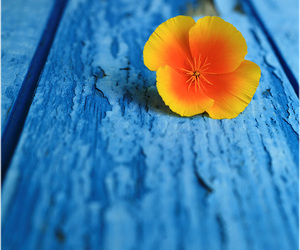 blue, colorful, and flower image