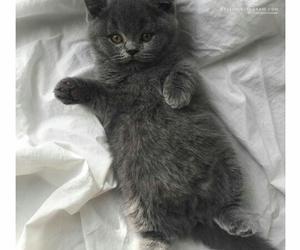 cat, tender, and cute image