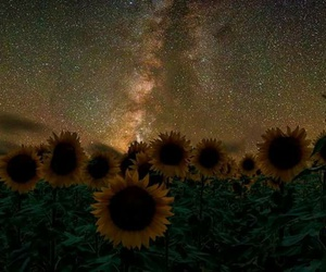 cosmic, flores, and naturaleza image