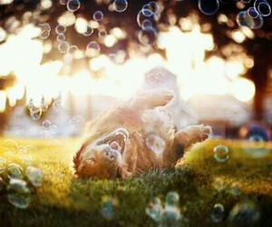 bubbles, dog, and happy image