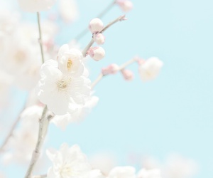 blue, nature, and pastel image