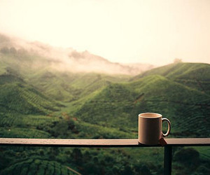 coffee, green, and photography image