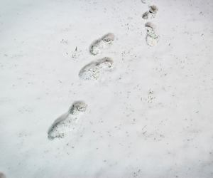 snow, steps, and winter image