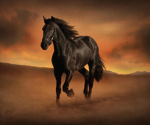 animals, beauty, and black image