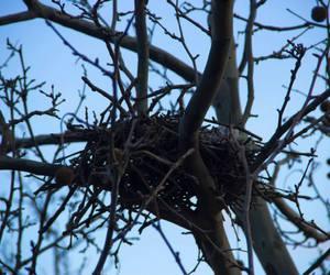 bird, carolmariga, and tree image