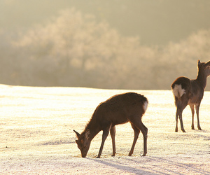 cold, deer, and field image