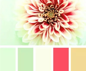balance, color, and pallete image