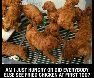 dogs, fried chicken, and funny image