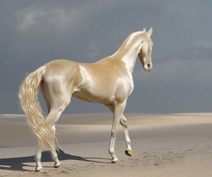 horse, animals, and aesthetic image