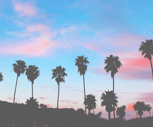 beach, blue, and palms image