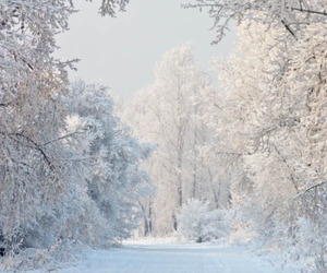 snow, winter, and white image