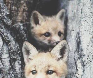 fox, animal, and cute image