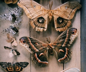 animals, indie, and butterflies image