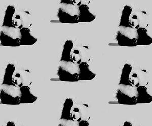 black and white, panda, and pattern image