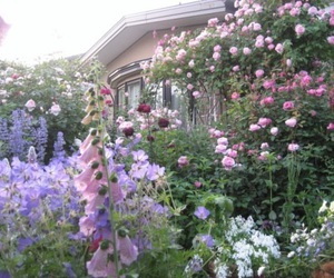 flowers, pink, and garden image